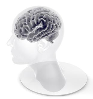 脳に刺激が入るセラサイズ