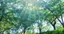 森で視力回復